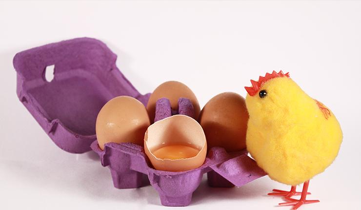 pilići jaja