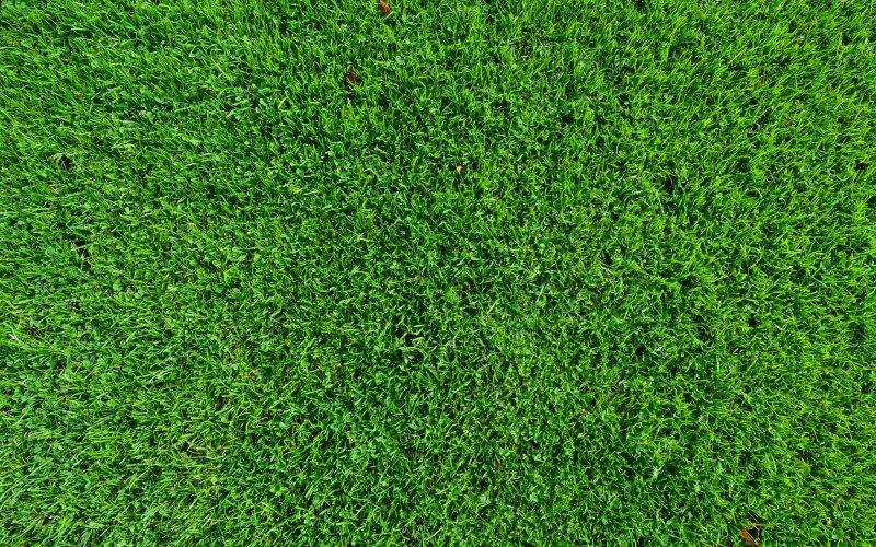 lijepi travnjak