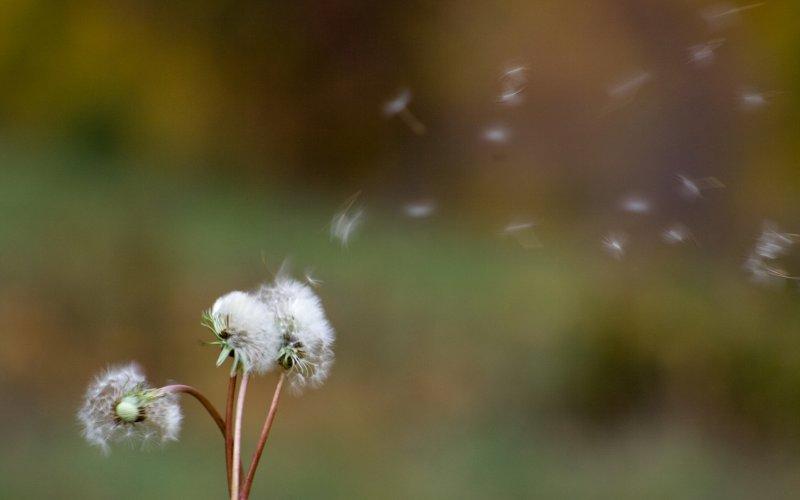 proljetna alergija