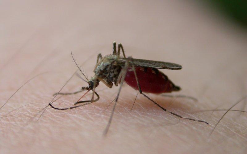 zamka komarac