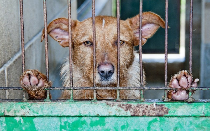 Kako pomoći životinjama u azilima
