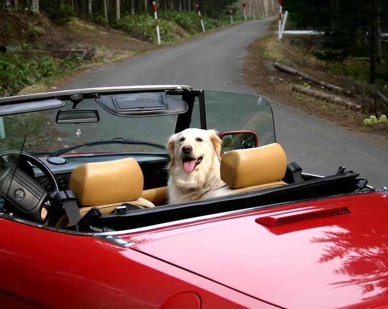 voznja-psa