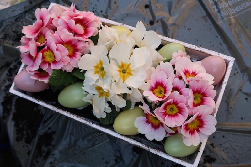 uskrsno-cvijece