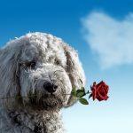 Zašto je važno oprostiti