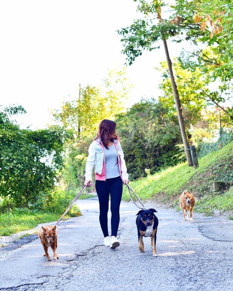 Priča o mojim psima